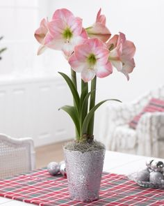 Grow an Amaryllis in the closet! (No, really) -->…