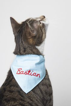 DIY personalized pet bandana for Design Sponge by Jessica Marquez Bandana Design, Cat Bandana, Dog Diapers, Happy Puppy, Old Dogs, Love Pet, Diy Stuffed Animals, Dog Toys, Diy Gifts