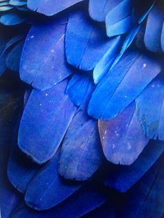 Pantone Blue, Pantone Color, Plant Leaves, Colors, Plants, Colour, Plant, Color, Planets
