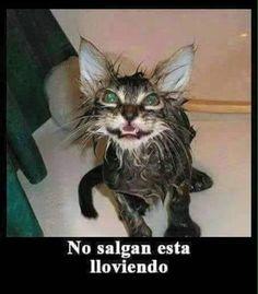 Memes en español, chistes cortos y humor. Funny Baby Memes, Funny Spanish Memes, Funny Babies, Cat Memes, Funny Cats, Cute Cats Photos, Best Fails, Epic Fail Pictures, Funny Phrases