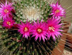 Venda de cactus e suculentas Cactos Brasil