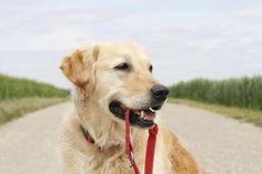 Los largos paseos diarios son esenciales para nuestros #perros. Por ello en #Huellas os mostramos el mejor equipamiento para mantenerlos contentos.