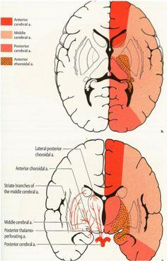 ACA: Anterior Cerebral Artery - LearnNeurosurgery.com