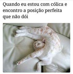 #amoanimais #gato #cachorro #humorpet #filhode4patas #maedepet