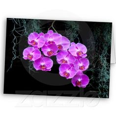 Dew-Kissed Orchids Cards by birdersue from Zazzle - Digital photography and design by Sue Melvin