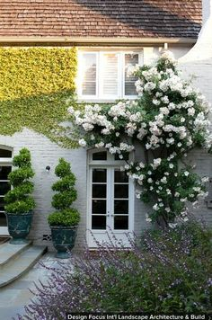 Stucco is fairly sturdy, but removing the vines can chip and damage the surface. Grow vines on a trellis or support. Grow on a trellis placed at least 6 inches away from the side of your home — most are placed too close, which allows the vines to adhere to the exterior wall and the trellis.   Trellises can even be built with a hinge at the bottom, allowing the entire structure to be tipped forward when you need to access the exterior, such as for repainting.