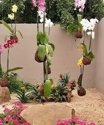 Image result for jardim com bromelias e pedras