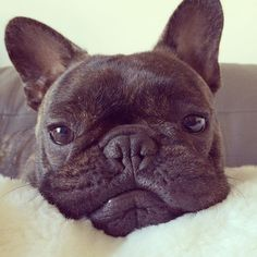"""I wonder what people who type """"u"""" and """"ur"""" do with all their extra time...  #probablytakelongernaps by pierrebrando"""