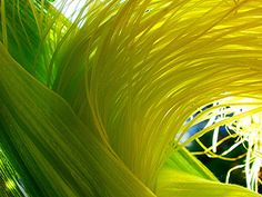 lemongrass- not only is the color lovely but I also love the texture of this photo.