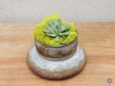 Vintage #succulent container