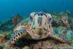Sea Turtle Nesting Riviera Maya & Cancun