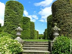 Cylinders of Quercus ilex (holm oak) at Arley Hall in Cheshire. Source: The Galloping Gardener