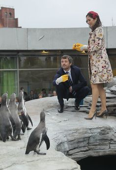 Danish Crown Prince Frederik and Crown Princess Mary, who is pregnant with twins, feed Humboldt penquins at the Ozeaneum maritime museum and aquarium on September 27, 2010 in Stralsund, Germany. Frederik and Mary are on a two-day visit to northern Germany.  (September 26, 2010 - Source: Sean Gallup/Getty Images Europe) see more angles »