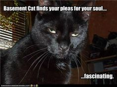 Basement Cat finds your pleas for your soul....