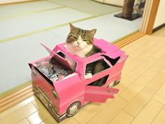 Maru: [Give me genuine Cadillac. This toy is too small for me.]