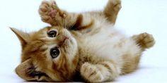 gatos tiernos - Buscar con Google