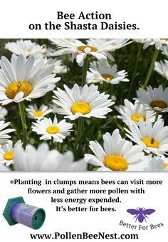 Plant In Clumps For Pollen Bees