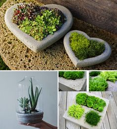 DIY terrarium tinkering with concrete The Effective Pictures We Offer You About Garden Planters elevated A quality picture can tell you many things. Concrete Crafts, Concrete Projects, Concrete Planters, Garden Planters, Terrarium Diy, Terrariums, Diy Garden Decor, Garden Art, Jardin Vertical Artificial