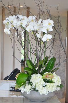 88235216bda3 46 Best Solomon bloemen images in 2019