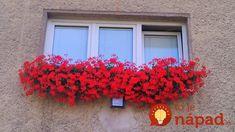 Pani Monika má muškáty ako z rozprávky: Prezradila nám tajomstvo bujarého kvitnutia, teraz to môže vyskúšať každý! Wreaths, Fall, Red, Home Decor, Autumn, Decoration Home, Door Wreaths, Fall Season, Room Decor