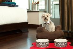 Sometimes a hotel stay is just better with a four-legged friend. Meet Nikos, the Director of Pet...