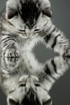 """Paws up! Okay nobody is going to get hurt if you just tell me who you are, and why you are copying my every move..."""