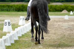 Gallop properly: From Angaloppieren, over sitting down to exercises . Gallop properly: From Angalo Horse Exercises, Cute Ponies, Natural Horsemanship, Horse Training, Horse Love, Animals And Pets, Fur Babies, Equestrian, Horses