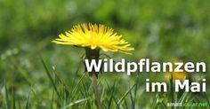 Schmackhaftes aus Feld und Flur: Wildpflanzen im Mai