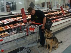 Ten Things People Believe About Service Dogs (That Simply Are Not True)