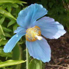 Resultados de la Búsqueda de imágenes de Google de http://www.gardenstew.com/plantstew/pimg/ps-l/9000892_0.jpg