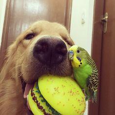 Görüp Görebileceğiniz En Alışılmadık Fakat En Tatlı Dostluk: Bir Köpek, Sekiz Kuş ve Bir Hamster!