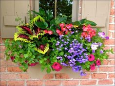 25 Most Beautiful Flowers Ideas For Window Boxes 2019 best flowers for window boxes 34 Window Box Plants, Window Box Flowers, Balcony Flowers, Window Planter Boxes, Outdoor Flowers, Flower Planters, Flower Baskets, Fall Planters, Planter Ideas