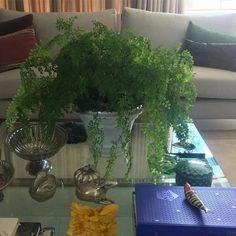 Hoje minha mesa está assim! Arranjo da natureza encantada com minha Avenca! Bom dia!  @verdequetequeroverde