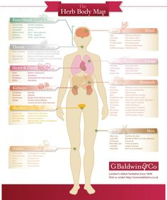 Herb Body Map - the health benefits of different herbs and what parts of the body they are good for.