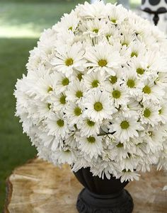 Favorite Flower (: Yes. Please.