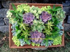 Succulent frame with a great step-by-step tutorial.  Like the small size and color of this arrangement.