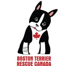 Boston Terrier Rescue Canada's Fall Online Auction