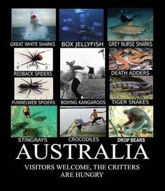 lol I'm Australian and have never encountered any of these in my life (spare the koala and a few kangaroos who mostly go away once you approach) so u usually have nothin to worry about