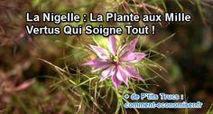 Découvrez la plante aux milles vertus et ses nombreux bienfaits en matière de santé et de beauté.  Découvrez l'astuce ici : http://www.comment-economiser.fr/nigelle-plante-vertus.html?utm_content=buffer3812c&utm_medium=social&utm_source=pinterest.com&utm_campaign=buffer