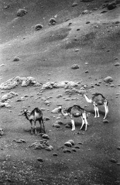 Últimas noticias: Los tres Reyes de Oriente han abdicado y han liberado a los camellos. Los pajes han montado una cooperativa y traerán los regalos en bicicleta. http://www.veniracuento.com/