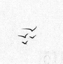My signature seagulls