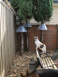 Cat Barrier – EuroFence - Cats and Kittens - Outdoor Cat Enclosure, Reptile Enclosure, Cat Fence, Cat Run, Cat Playground, Cat Garden, Outdoor Cats, Cat Friendly Home, Space Cat