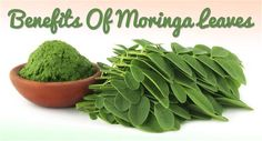 Adding Moringa to Your Beauty Regimen Can Promote Natural Hair Growth And Beautiful Skin Care: http://www.latesthairstyleshow.com/