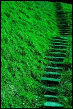 I like this color of the plants on the side of the stairs because of the variance of lightness and darkness of the green color where the light hits. I also like how the stairs compliment the natural green color. World Of Color, Color Of Life, Color Of The Year, Emerald City, Emerald Green, Go Green, Green Colors, Green Grass, Green Shot