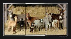 27 Fresh Faces http://www.robmacinnis.com/farm-series/ Amazing series of photos of farm animals! Love this.