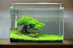 Iwagumi aquascape posted on Instagram (@aquascapenl)