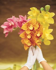 You only need a few stems of these colorful orchids