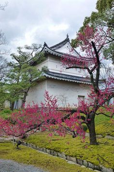 Nijo Castle in central Kyoto is one of the must see destinations in the city if you have an interest in Japans feudal history, architecture and gardens. It's also a top spot in spring for cherry blossoms and for autumn colour.