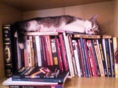 Cats in the Library series