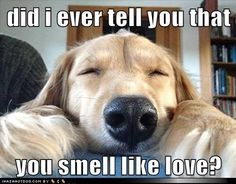 did I ever tell you that you smell like love?